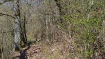 A la frontière Franco/Belge, au sein du parc naturel régional des Ardennes, superbe terrain boisé d'une superficie de 5 hectares composé exclusivement de chênes